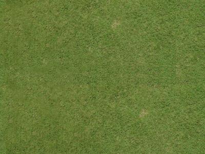 Map หญ้า grass texture